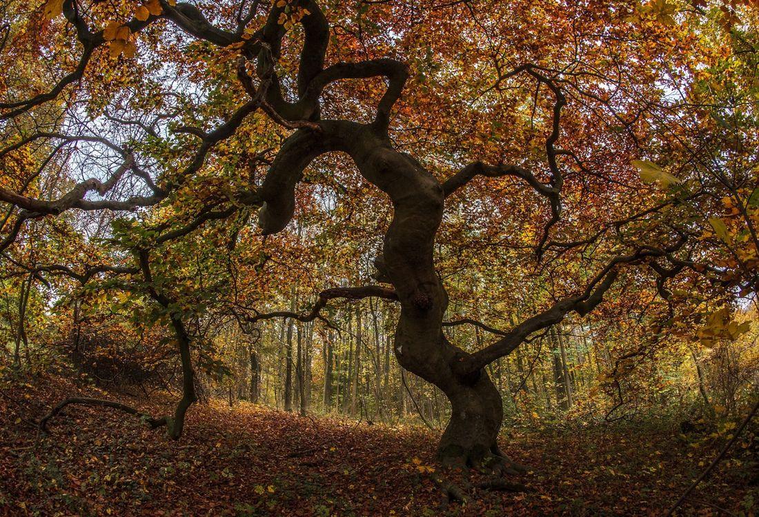 2 Suentelbuche Herbst