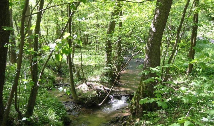 Bach Wald Landschaft Am Au1