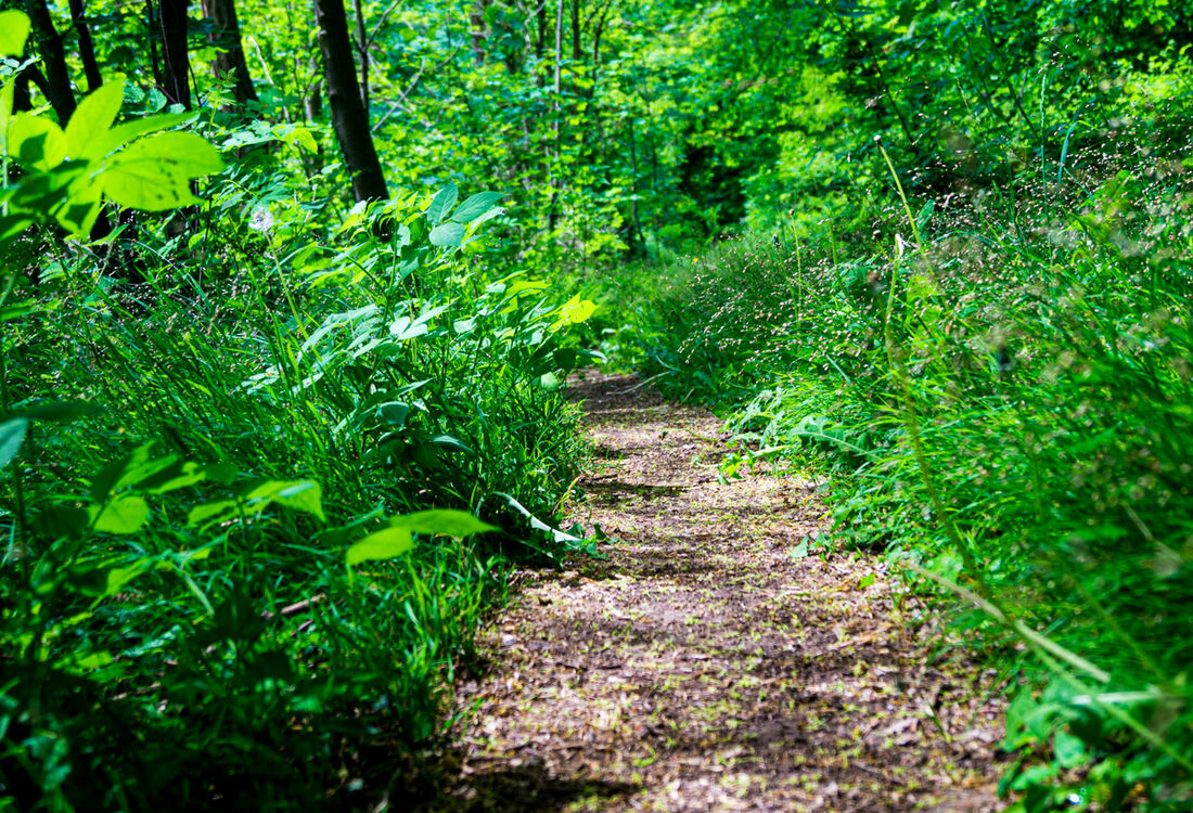 Etappe5 Waldpfad