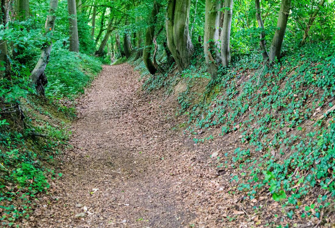 Etappe5 Waldweg