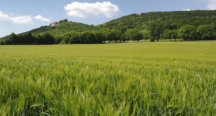 Gerstenfeld Vor Der Schaumburg