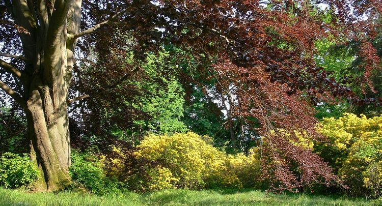 Rhododendronbluete Im Ohrbergpark