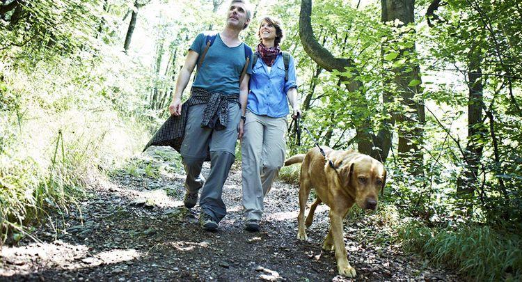 Wandern Mit Hund 2